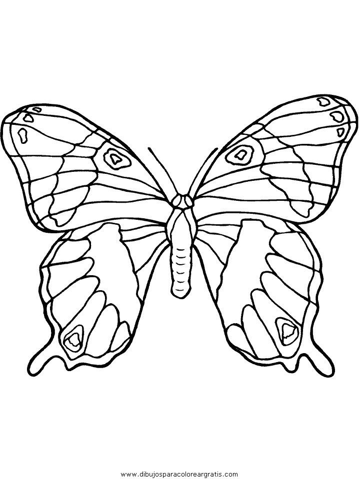 animales/mariposas/mariposas_018.JPG