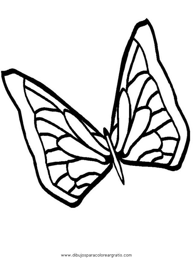 animales/mariposas/mariposas_021.JPG