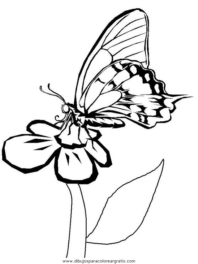 animales/mariposas/mariposas_023.JPG