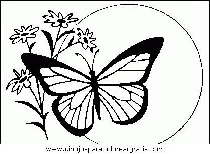 animales/mariposas/mariposas_034.JPG