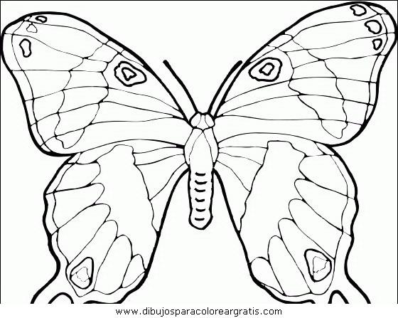 animales/mariposas/mariposas_039.JPG