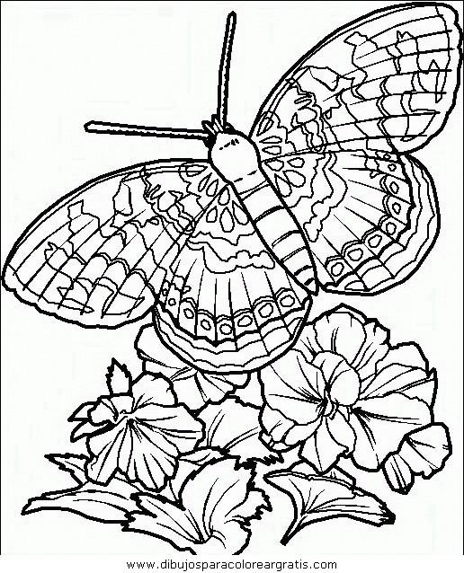 animales/mariposas/mariposas_042.JPG