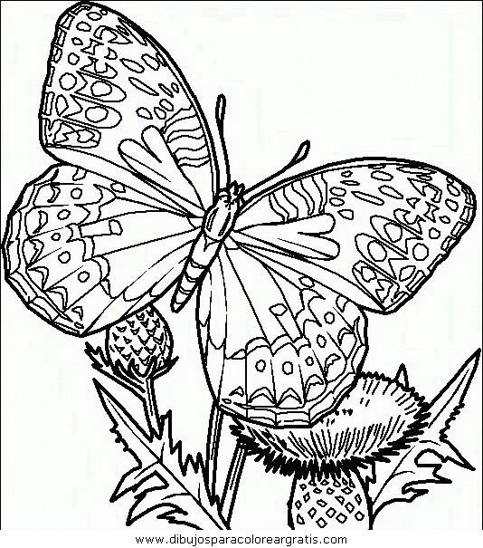 animales/mariposas/mariposas_043.JPG