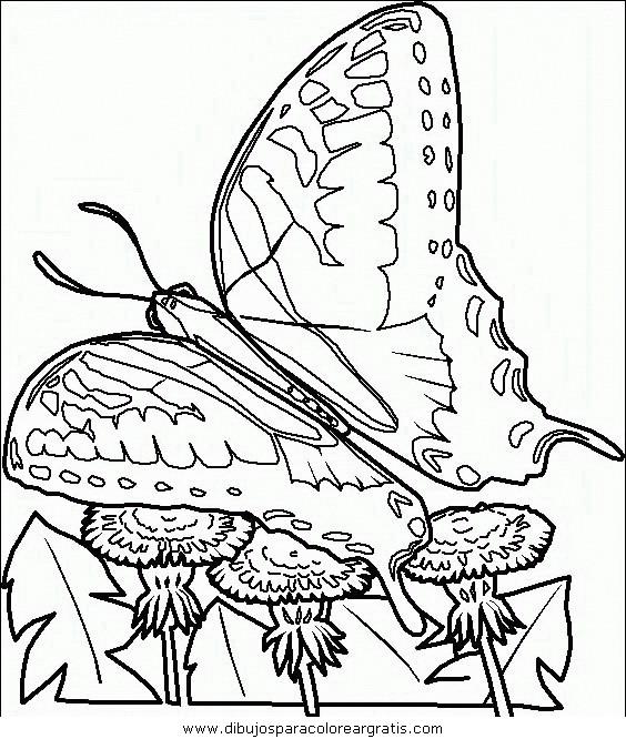 animales/mariposas/mariposas_045.JPG