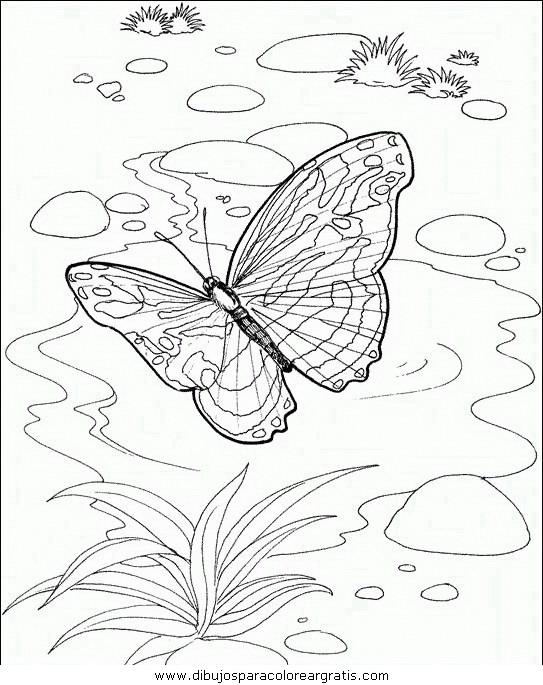 animales/mariposas/mariposas_047.JPG
