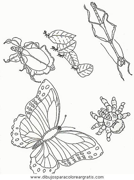 animales/mariposas/mariposas_050.JPG