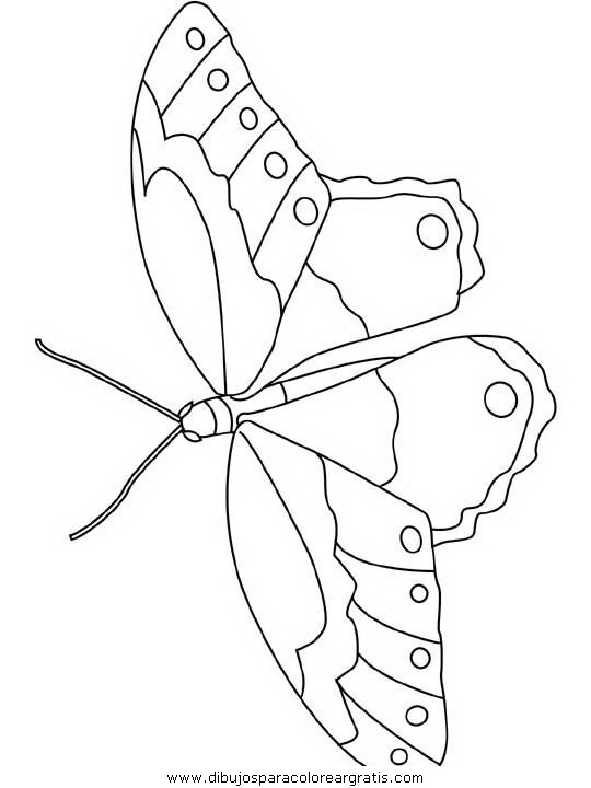 animales/mariposas/mariposas_052.JPG