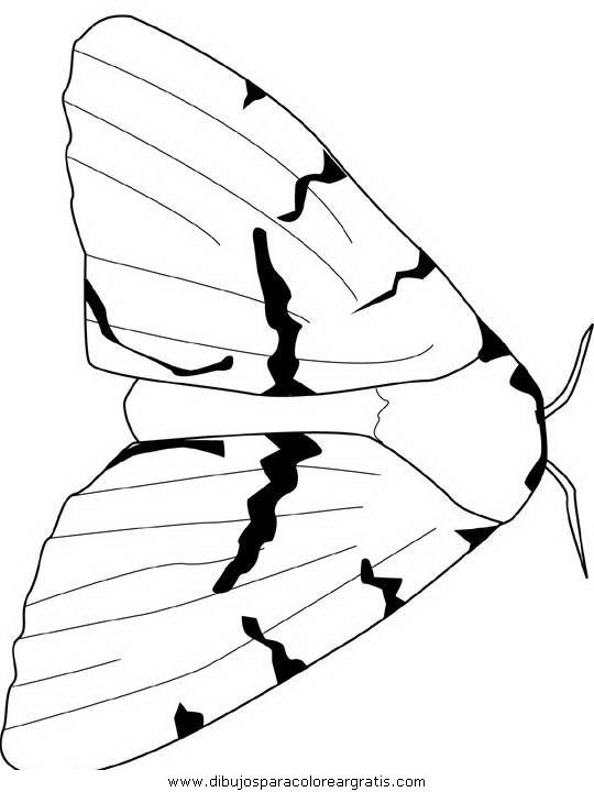 animales/mariposas/mariposas_053.JPG