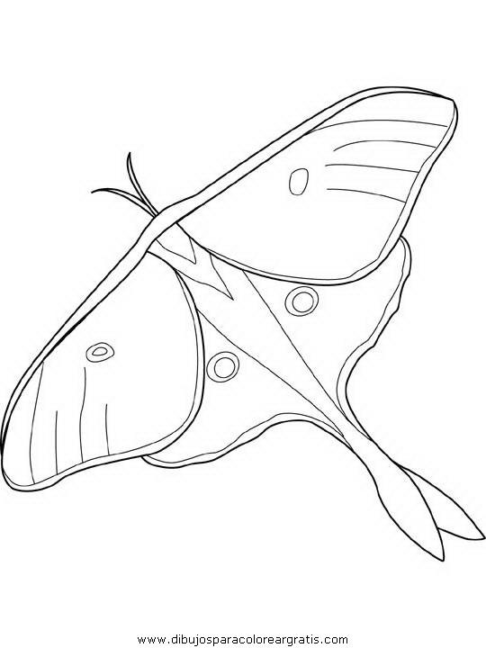 animales/mariposas/mariposas_055.JPG