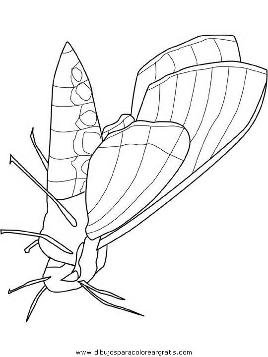 animales/mariposas/mariposas_059.JPG