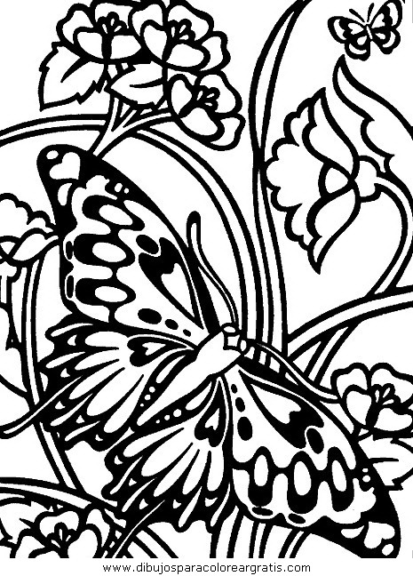 animales/mariposas/mariposas_062.JPG