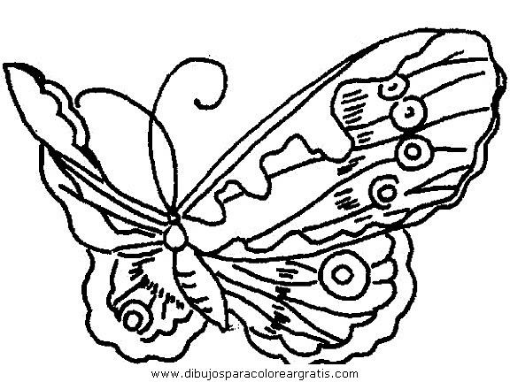 animales/mariposas/mariposas_063.JPG