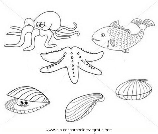 animales/mariscos/choritos_4.JPG