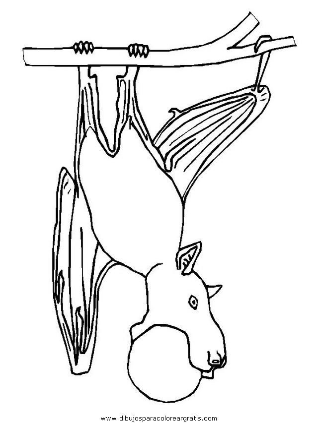 animales/murcielagos/murcielagos_04.JPG