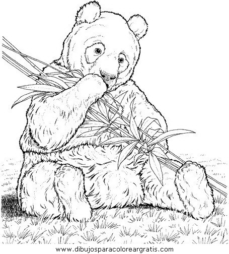 animales/osos/osos_004.JPG