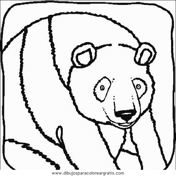 animales/osos/osos_042.JPG