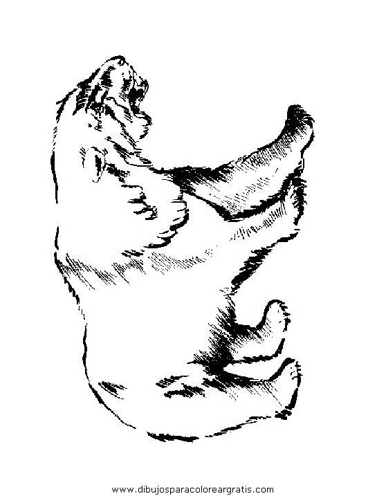 animales/osos/osos_082.JPG