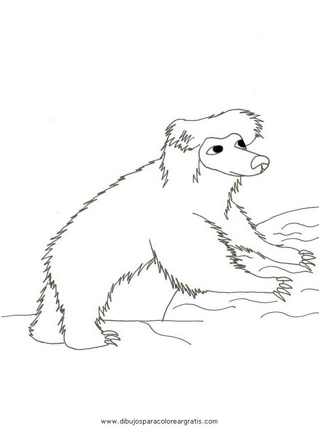 animales/osos/osos_101.JPG
