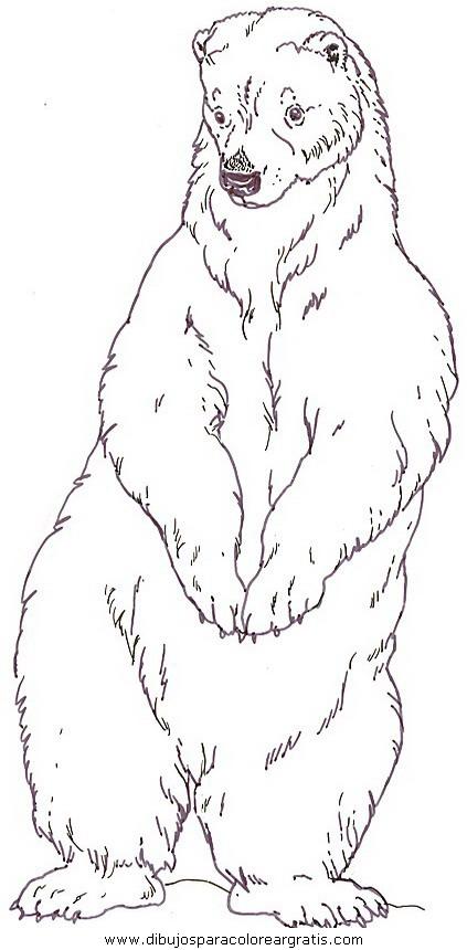 animales/osos/osos_113.JPG
