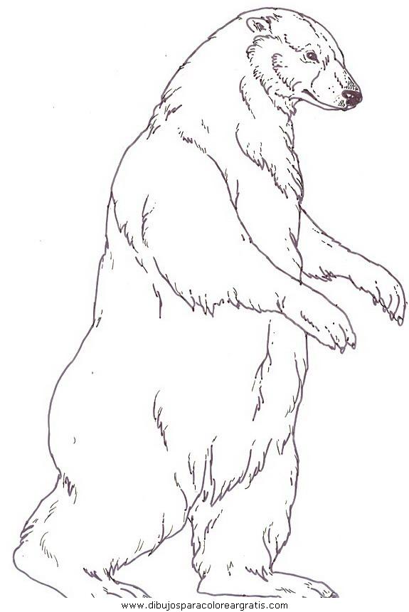 animales/osos/osos_114.JPG