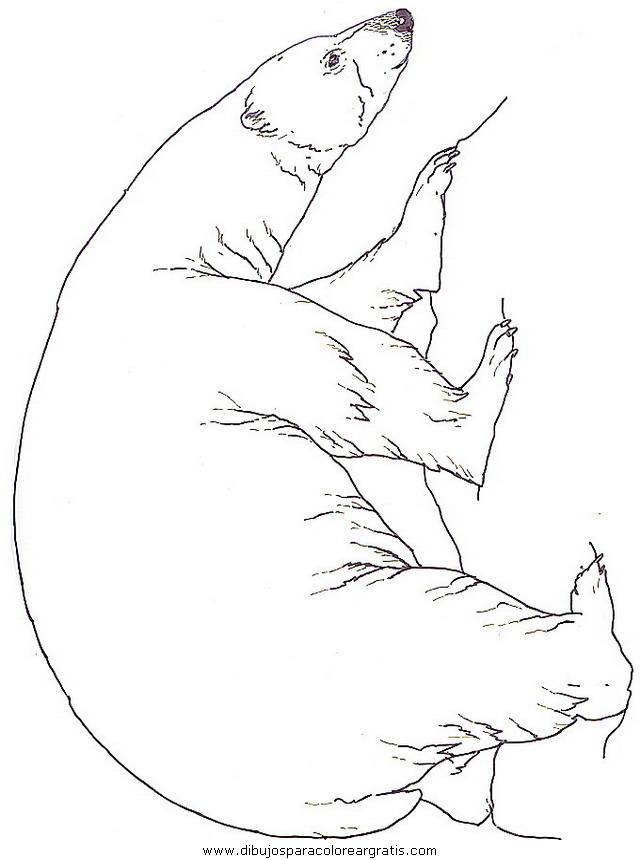 animales/osos/osos_115.JPG