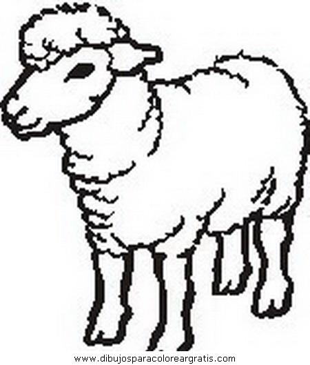 animales/ovejas/ovejas_00.JPG