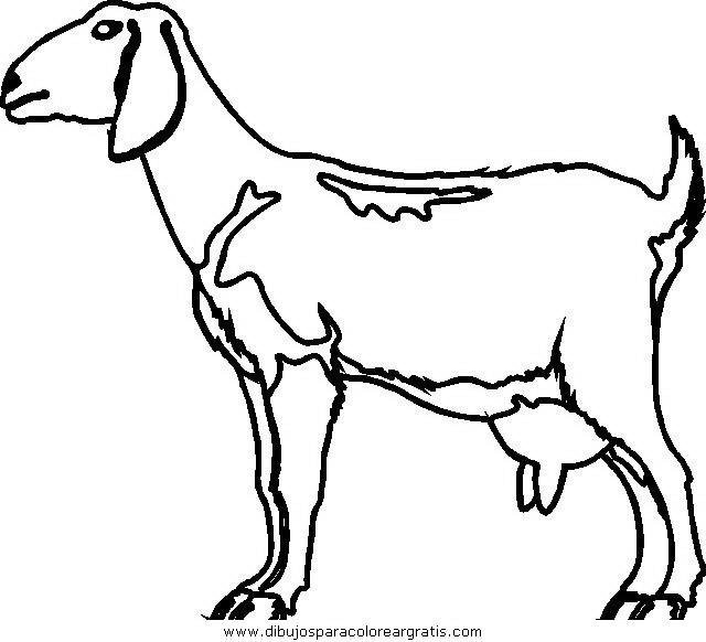 animales/ovejas/ovejas_02.JPG