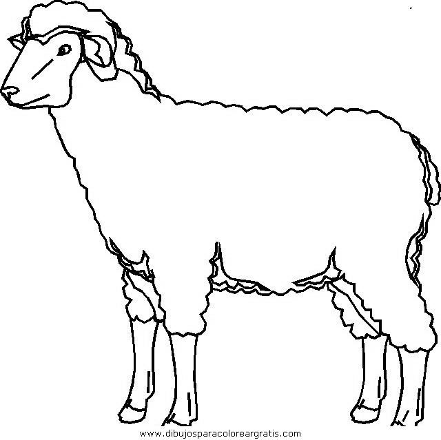 animales/ovejas/ovejas_04.JPG