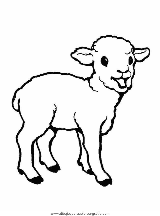 animales/ovejas/ovejas_07.JPG