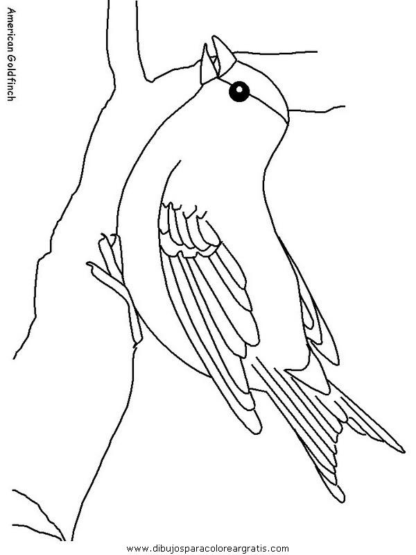 animales/pajaros/americangoldfinch.JPG