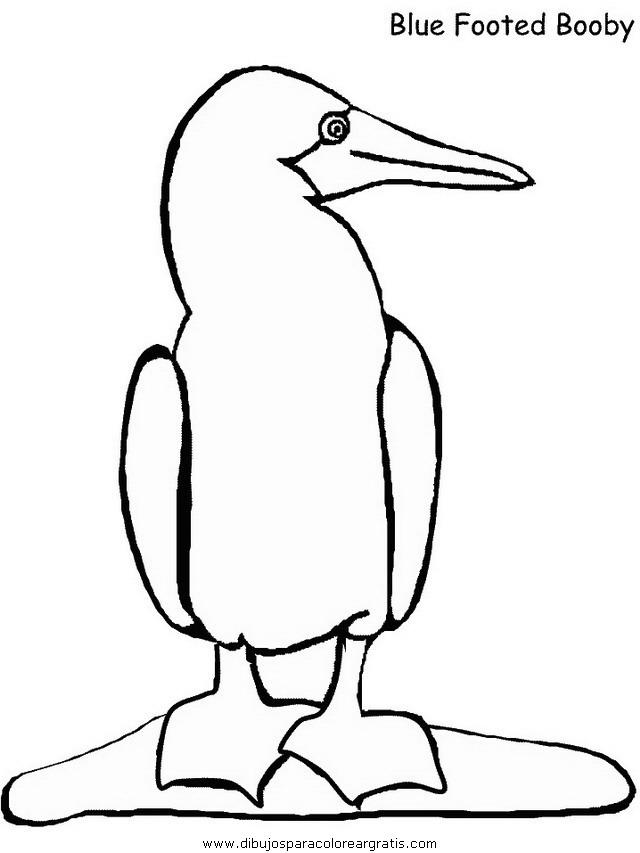 animales/pajaros/booby.JPG