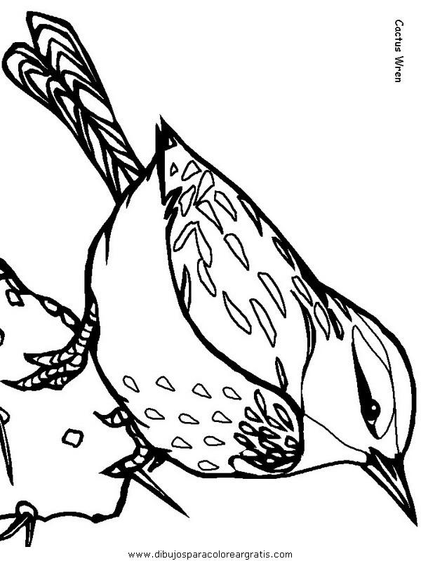 animales/pajaros/cactuswren.JPG