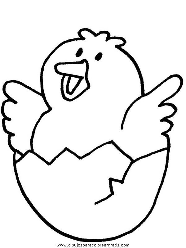 animales/pajaros/chick.JPG