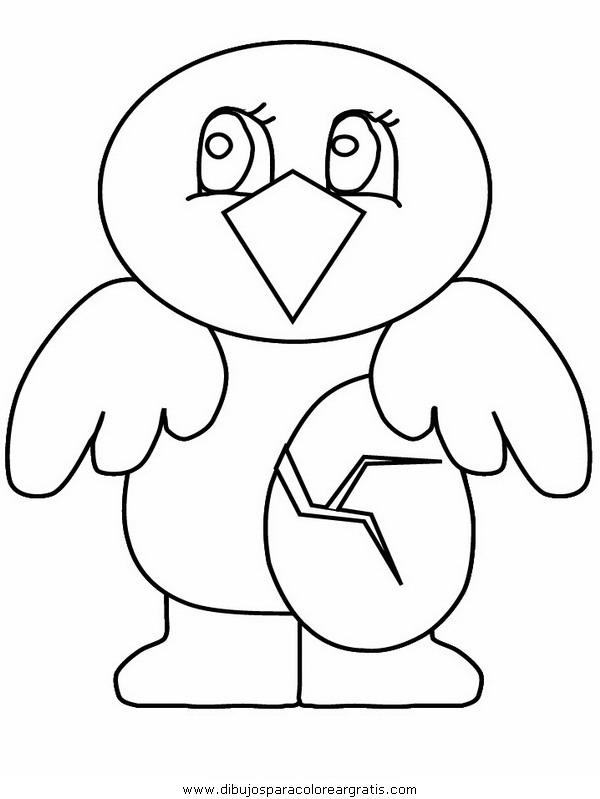 animales/pajaros/chick3.JPG