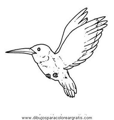 animales/pajaros/colibri_0.JPG