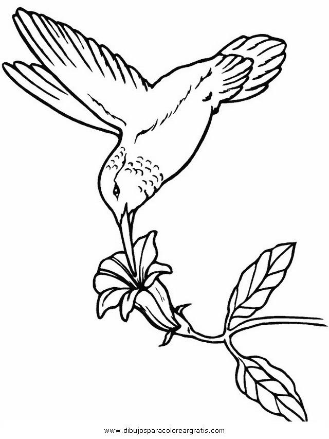 animales/pajaros/colibri_1.JPG