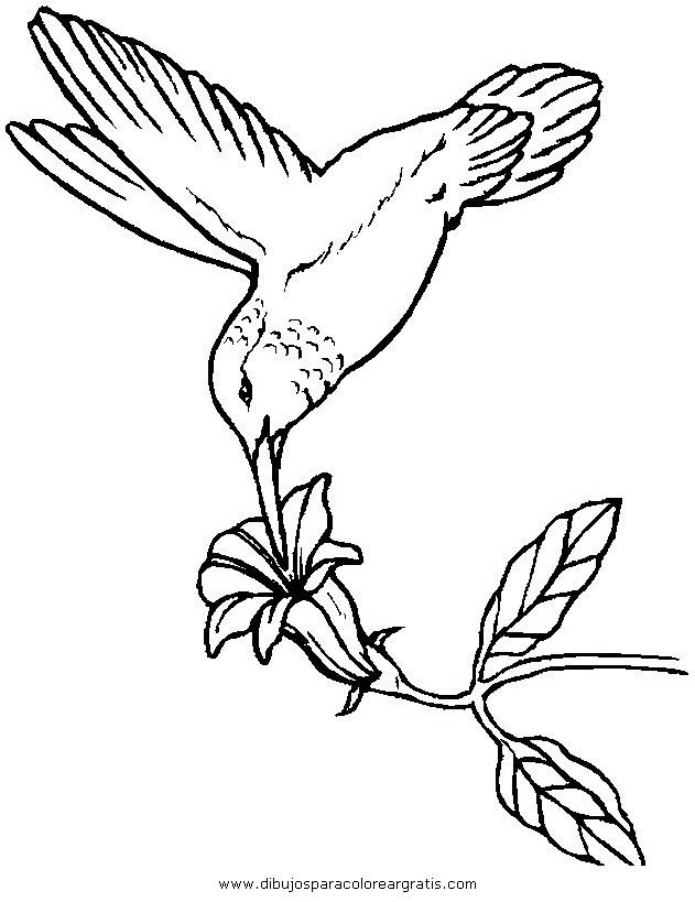 animales/pajaros/colibri_4.JPG