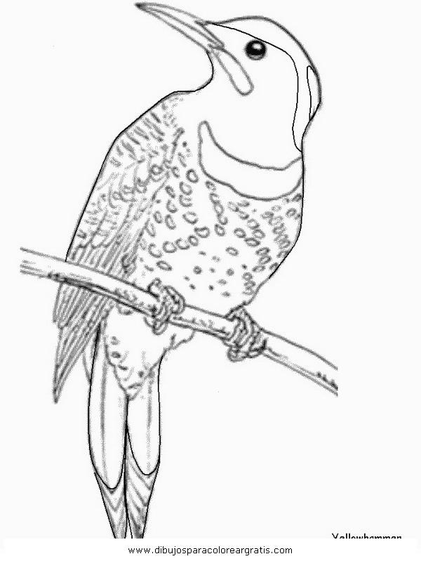animales/pajaros/colibri_6.JPG