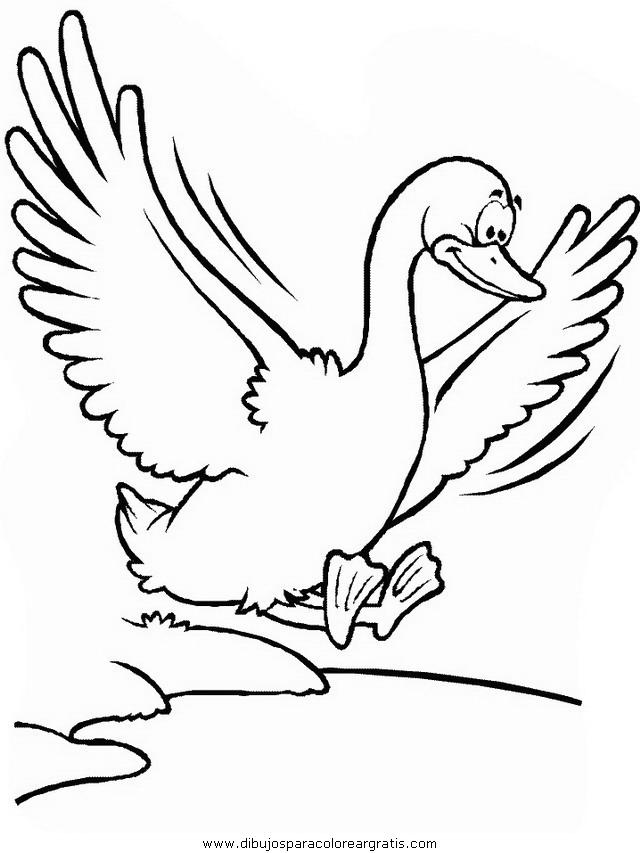 animales/pajaros/duck.JPG