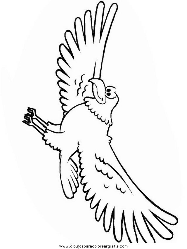 animales/pajaros/eagle.JPG