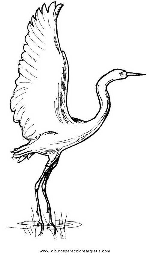 animales/pajaros/flamingo-2.JPG