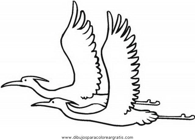 animales/pajaros/flamingo-3.JPG