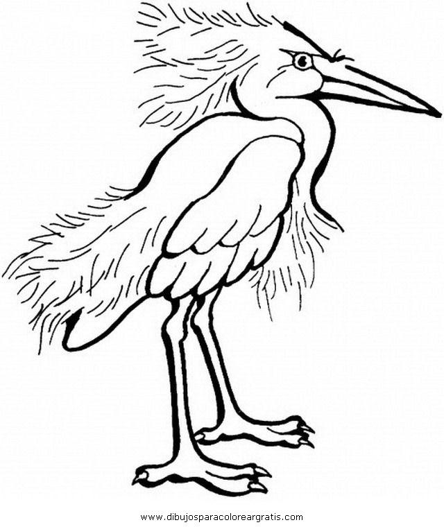 animales/pajaros/flamingo-4.JPG