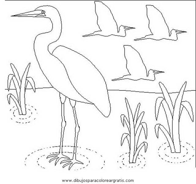 animales/pajaros/flamingo-5.JPG