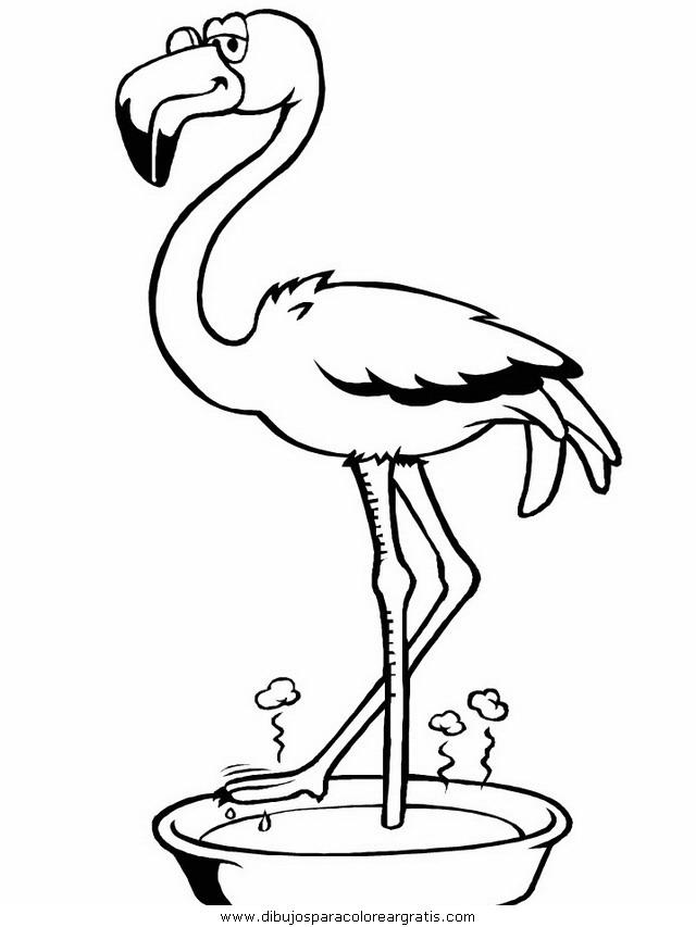 animales/pajaros/flamingo.JPG