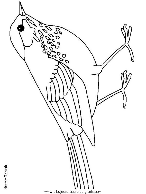animales/pajaros/hermitthrush.JPG