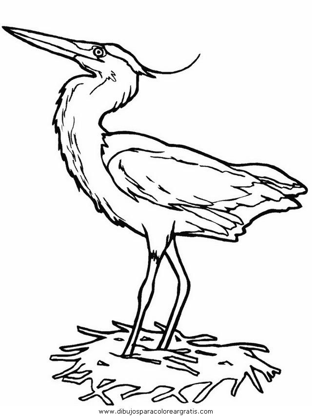 animales/pajaros/heron.JPG