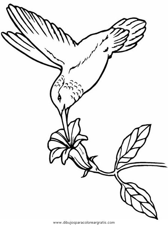 animales/pajaros/hummingbird.JPG