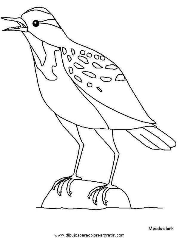 animales/pajaros/meadowlark.JPG
