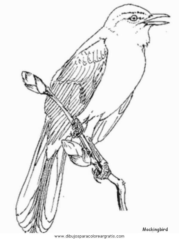 animales/pajaros/mockingbird.JPG